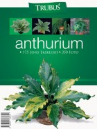 IS-Anthurium